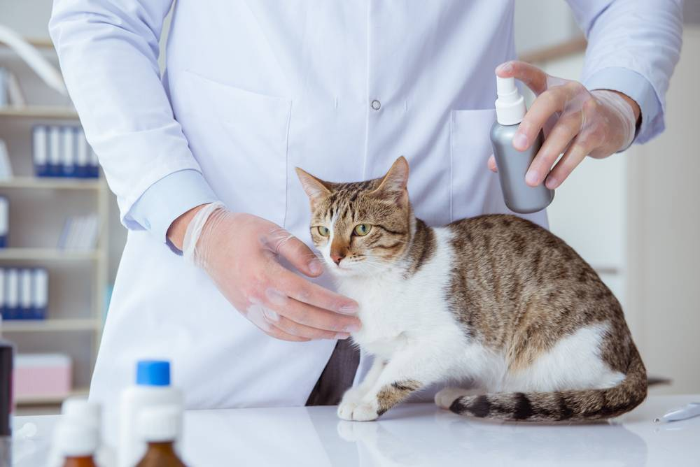 Можно ли в 2 года кастрировать кота: мнение ветериаров