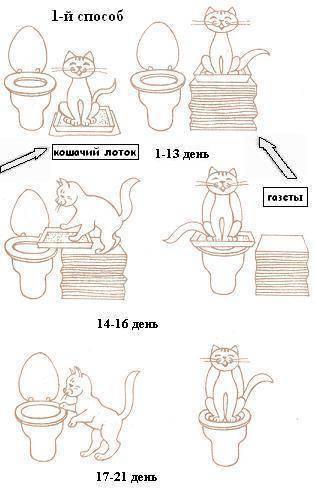 Как приучить котёнка ходить в лоток - инструкция в 4 шага