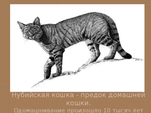Откуда появились кошки: откуда и от кого, кошки в древнем египте