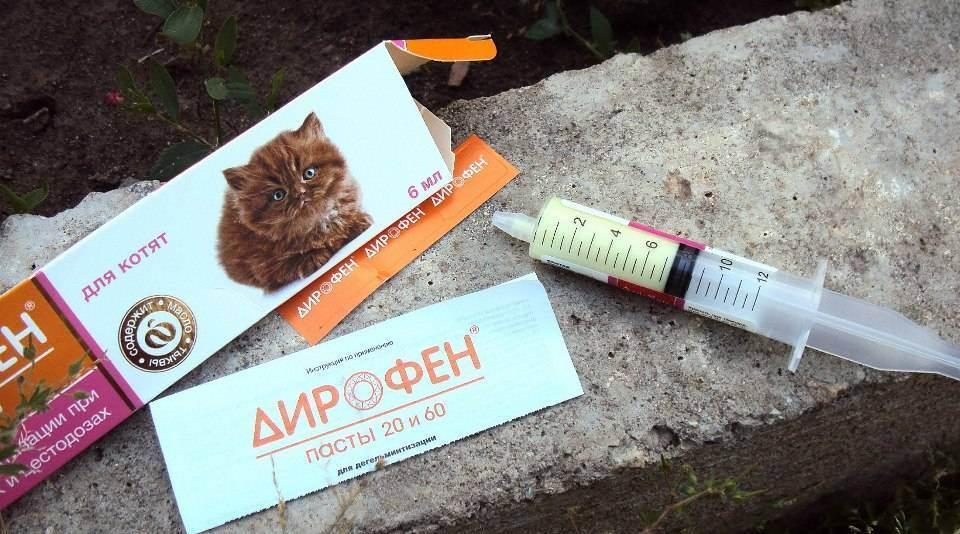Таблетки от глистов для кошек: препараты для дегельминтизации, рекомендации и обзор, как давать таблетки кошке