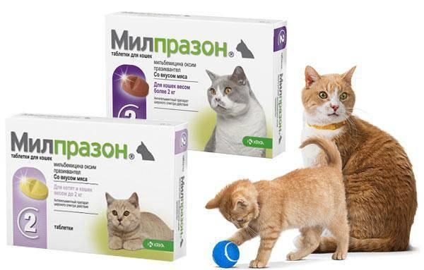 Милпразон для кошек: инструкция по применению, показания и противопоказания