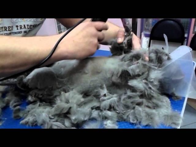 Как подстричь шерсть коту машинкой и ножницами самому