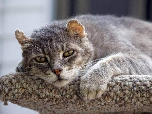 Как определить возраст котёнка: полезные советы для хозяев ' кошки '