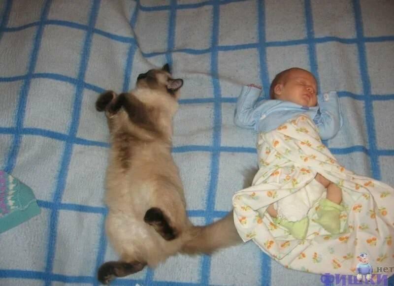 Ребенок и кот: что делать, если вы забеременели, а в доме уже есть кот и наоборот. мифы о котах и детях.