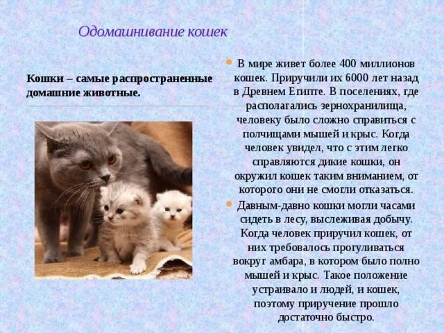 Одомашнивание кошек: история появления кошек в жизни человека. когда одомашнили котов?