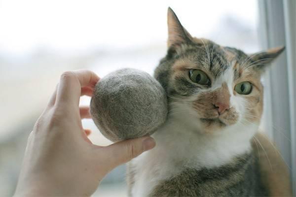 Если у кота клоками выпадает шерсть и болячки на коже — что делать?
