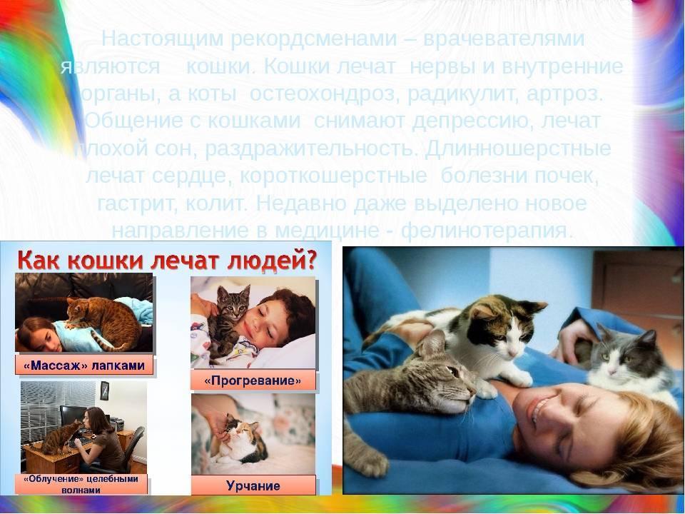 Кто лучше лечит кот или кошка