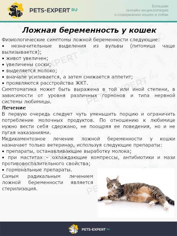 Как ведет себя кошка после вязки. поведение кошки после вязки, как происходит процесс размножения
