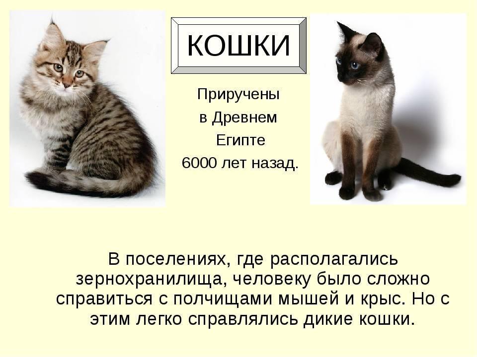 Как приручить кота в разном возрасте и степени одомашненности