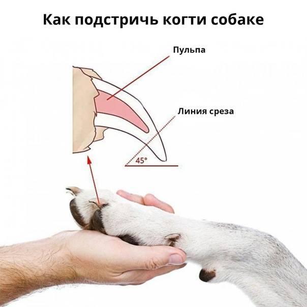 Как и чем подстричь когти котенку: выбор инструмента и пошаговая инструкция