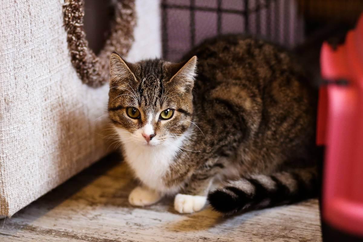 Вялость и слабость у кошек - симптомы, лечение, препараты, причины появления   наши лучшие друзья
