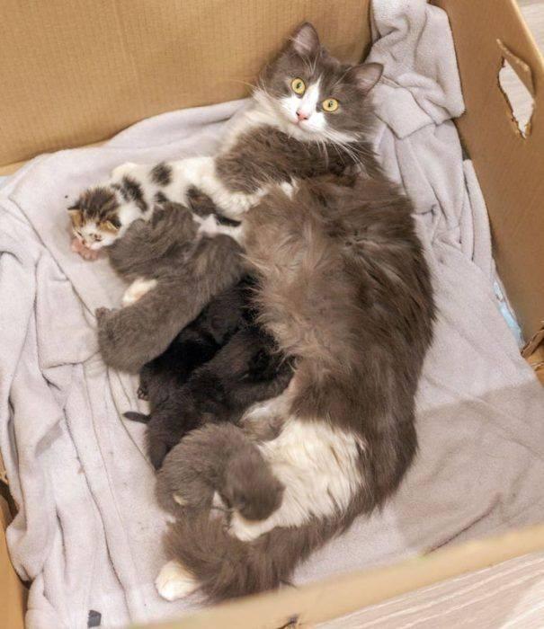 О продолжительности беременности у кошки: как определить срок вынашивания
