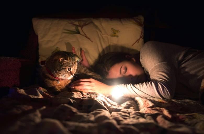 Сонник укусил кот и напал. к чему снится укусил кот и напал видеть во сне - сонник дома солнца