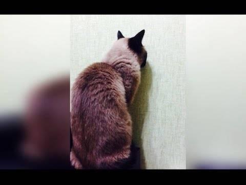 Трение кошек о ноги человека и мурлыканье могут многое рассказать об их состоянии : мозаика newsland – комментарии, дискуссии и обсуждения новости.