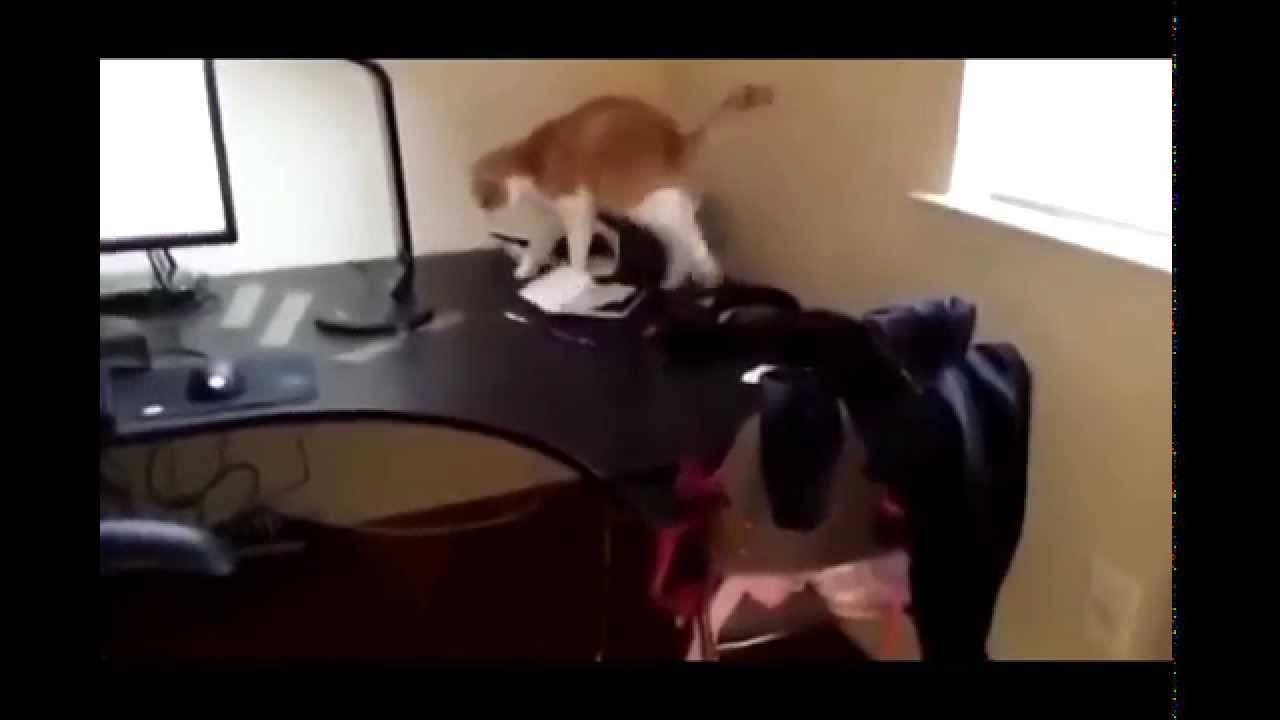 Топ-5 способов отучить кошку лазить по столах