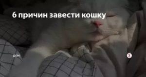 Плюсы кошки или кота в доме - минусов нет и быть не может