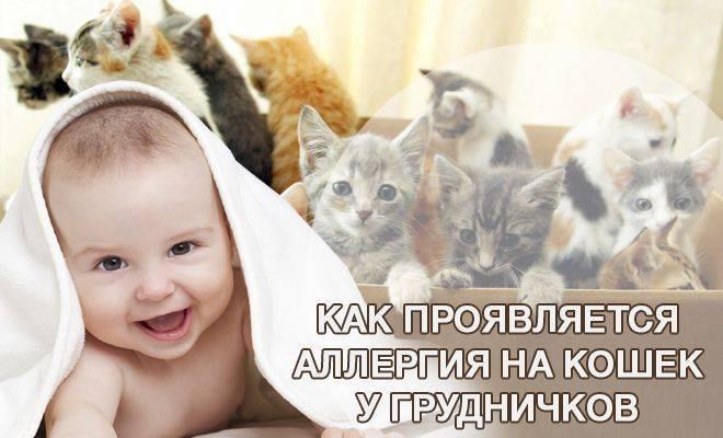 Как проявляется аллергия на кошек у детей и что с этим делать + видео