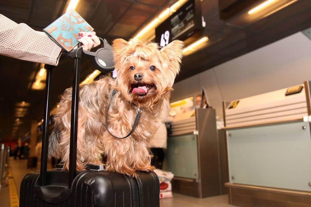 Что нужно учесть при вывозе домашних животных за рубеж? документы на питомца: какие документы нужны для перевозки в европу.