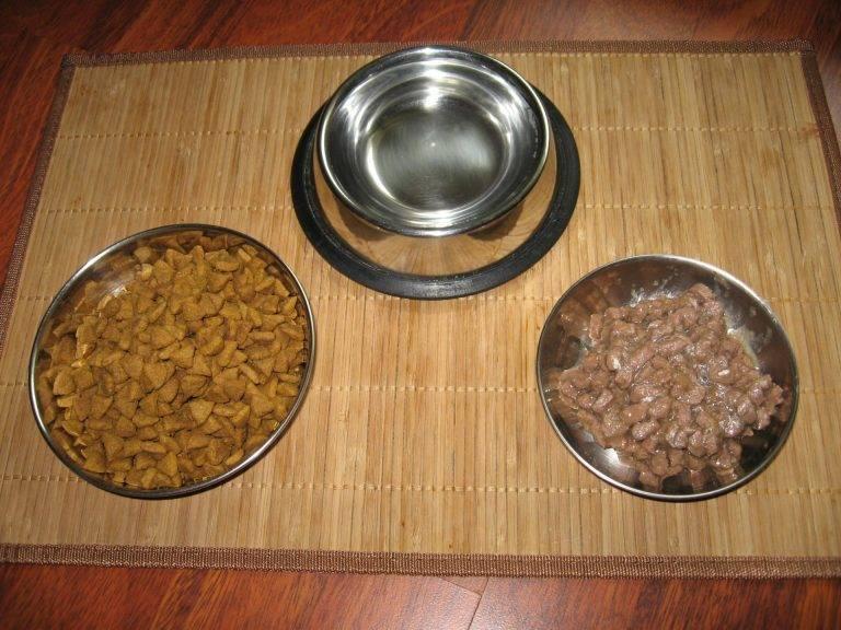 Когда можно давать котенку сухой корм, как приучить к нему, какой маркой кормить: советы и отзывы ветеринаров и владельцев животных