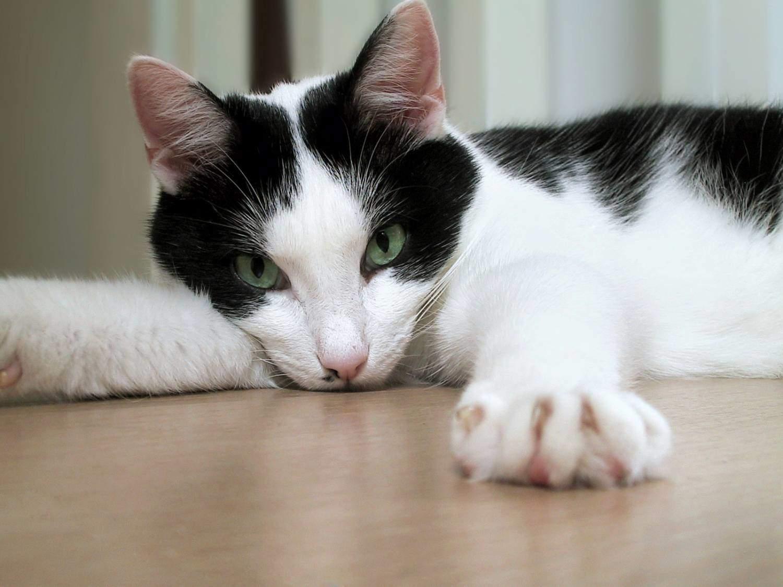 Как помочь кошке в жару? - запись пользователя леночка (hachocha) в сообществе домашние животные в категории кошки. болезни, прививки, советы по уходу - babyblog.ru