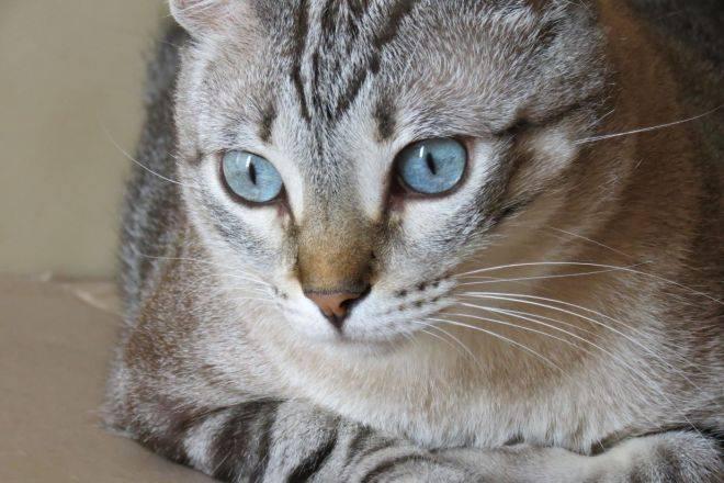 Охос азулес: голубоглазое чудо
