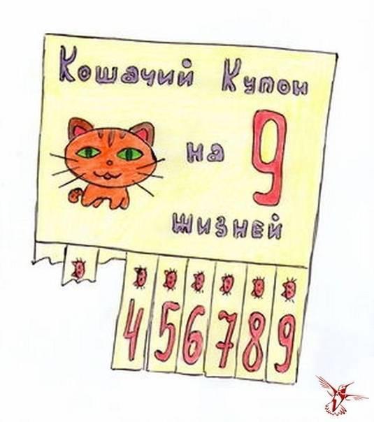 У кошек и котов год за сколько идет | считается возраст