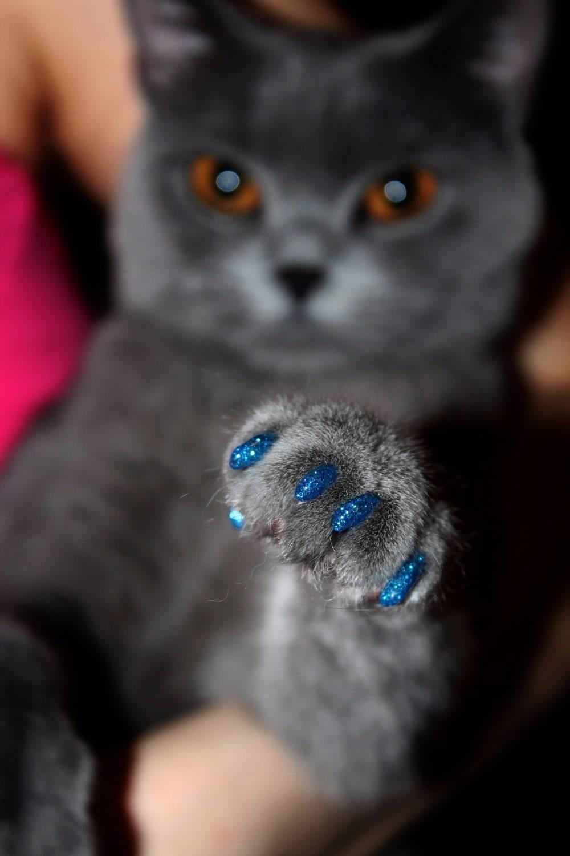 Антицарапки для кошек: фото, цена, рейтинг, отзывы, инструкция