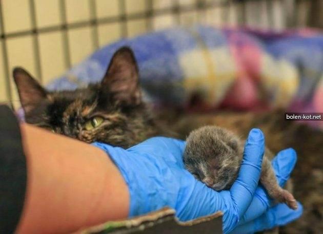 Как помочь кошке при родах на дому | наши лучшие друзья