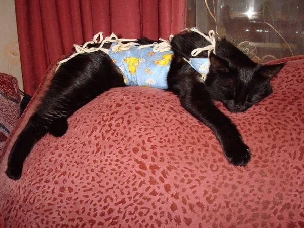 Что делать, если кошка не ест после стерилизации?