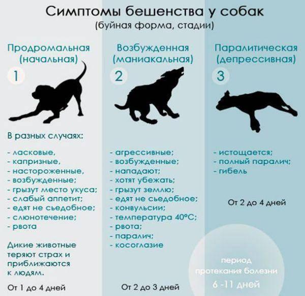 Как понять, что кошка рожает: основные признаки