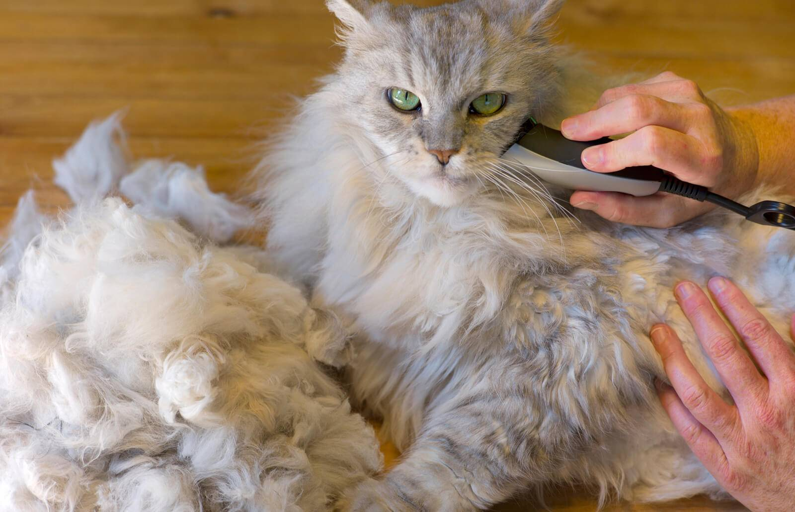 Колтуны у кошки — как избавиться?
