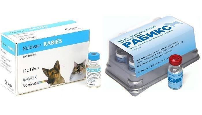 Укрепляем иммунитет кошки — вакцина «пуревакс»