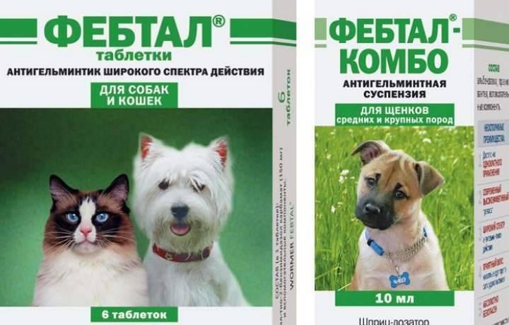 Фебтал-комбо: инструкция для кошек и собак фебтал-комбо: инструкция для кошек и собак
