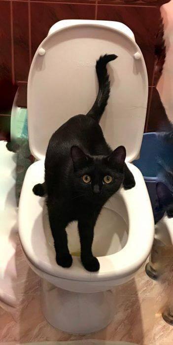 Запор у котенка: что делать в возрасте 1, 2, 3 месяца, что можно дать, как делать массаж, как понять, чем лечить