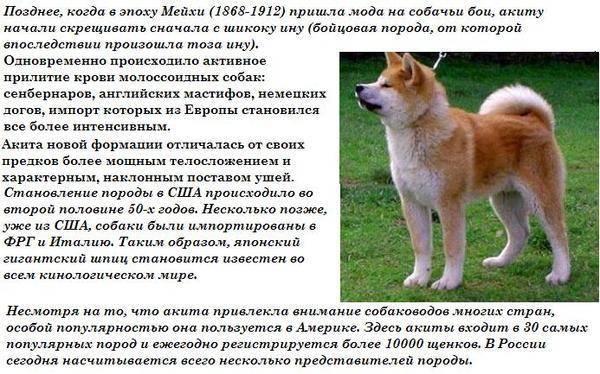 Описание и краткая характеристика популярных собак японских пород