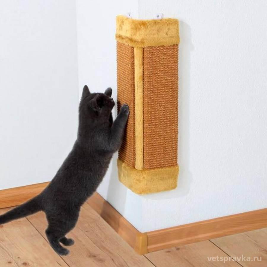 Когтеточка для кошек: особенности изготовления своими руками