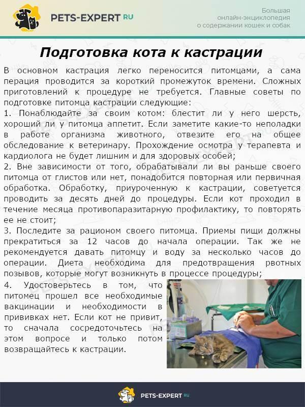 Можно ли кормить кошку перед стерилизацией?