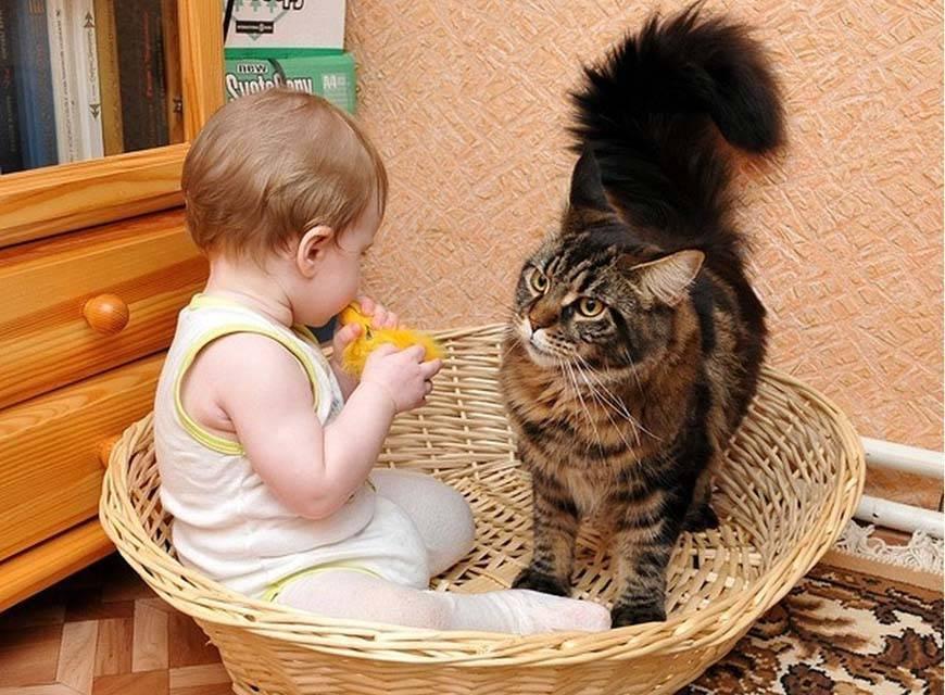 Какую лучше кошку завести для ребенка