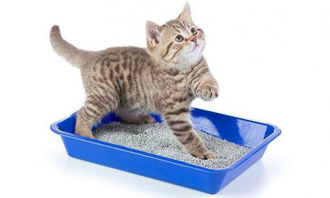 Приучение уличного кота к лотку