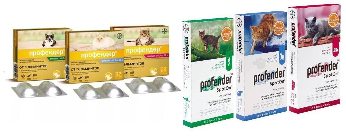Профендер для кошек: инструкция по применению   отзывы, цена