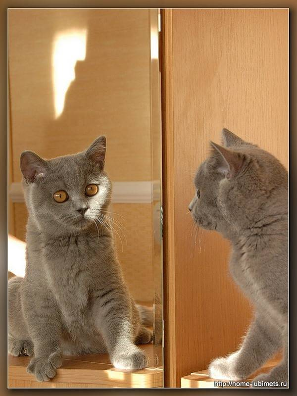 Как видят кошки — мир глазами питомца