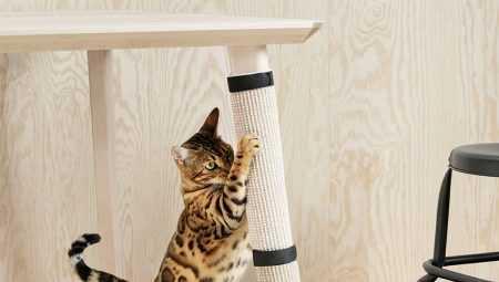 Как отучить кота драть мебель и не только? приучаем к хорошему поведению