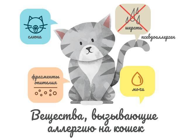 Как проявляется аллергия на кошек и основные причины заболевания