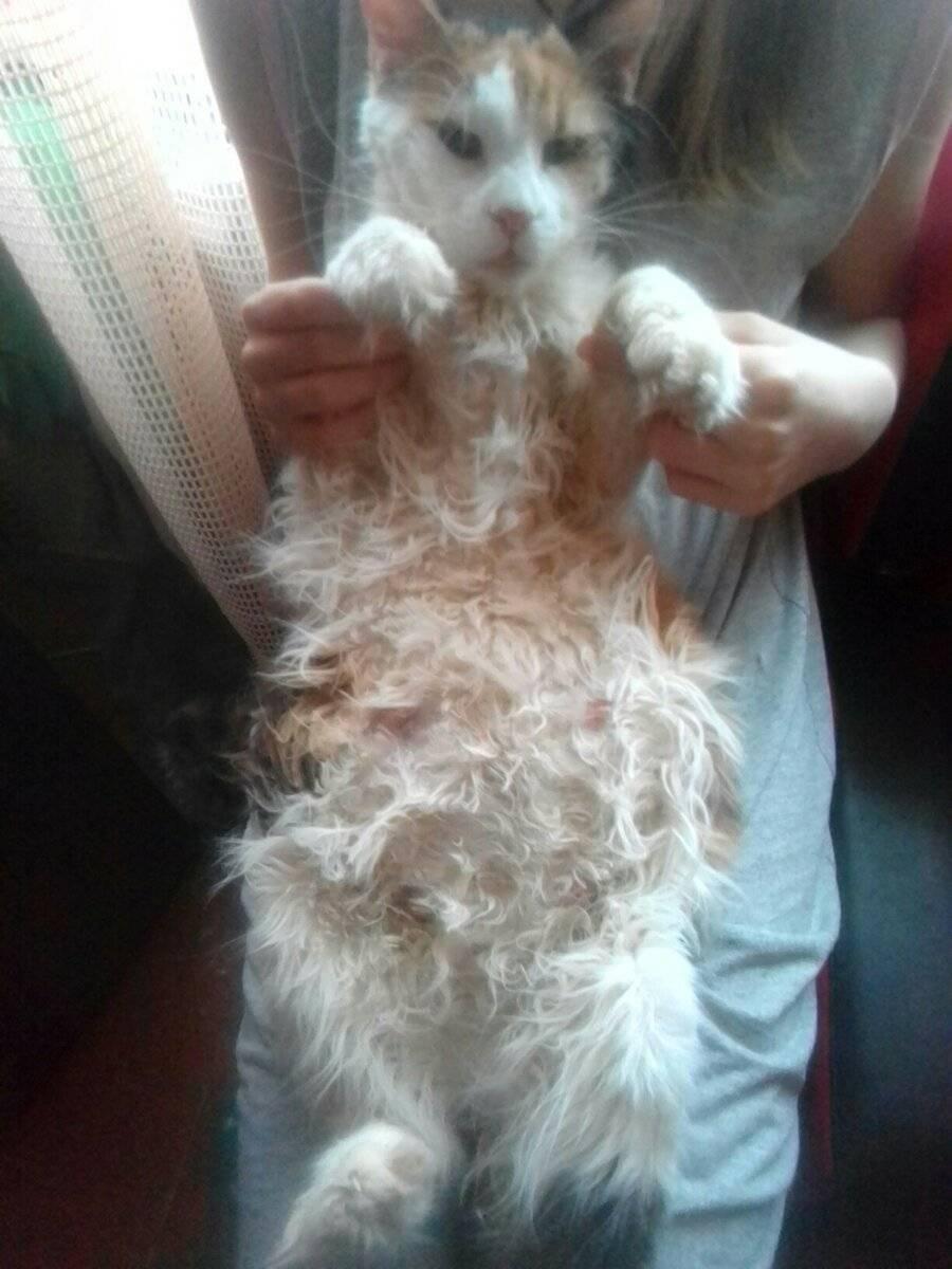 Как понять что кошка беременна: характерные признаки и симптомы