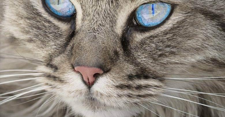 Легенды о кошках