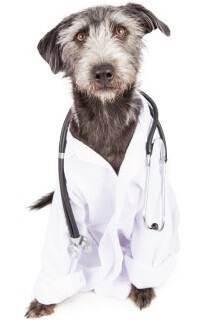 Ветеринар-дерматолог для животных в москве