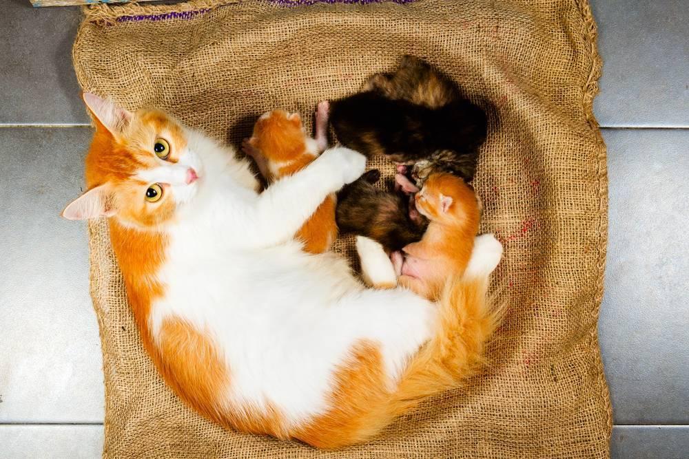 Сонник к чему снятся кошки беременной женщине. к чему снится к чему снятся кошки беременной женщине видеть во сне - сонник дома солнца
