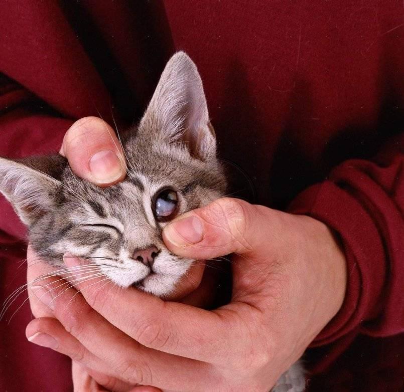 Что делать, если кошка стала щурить один глаз?
