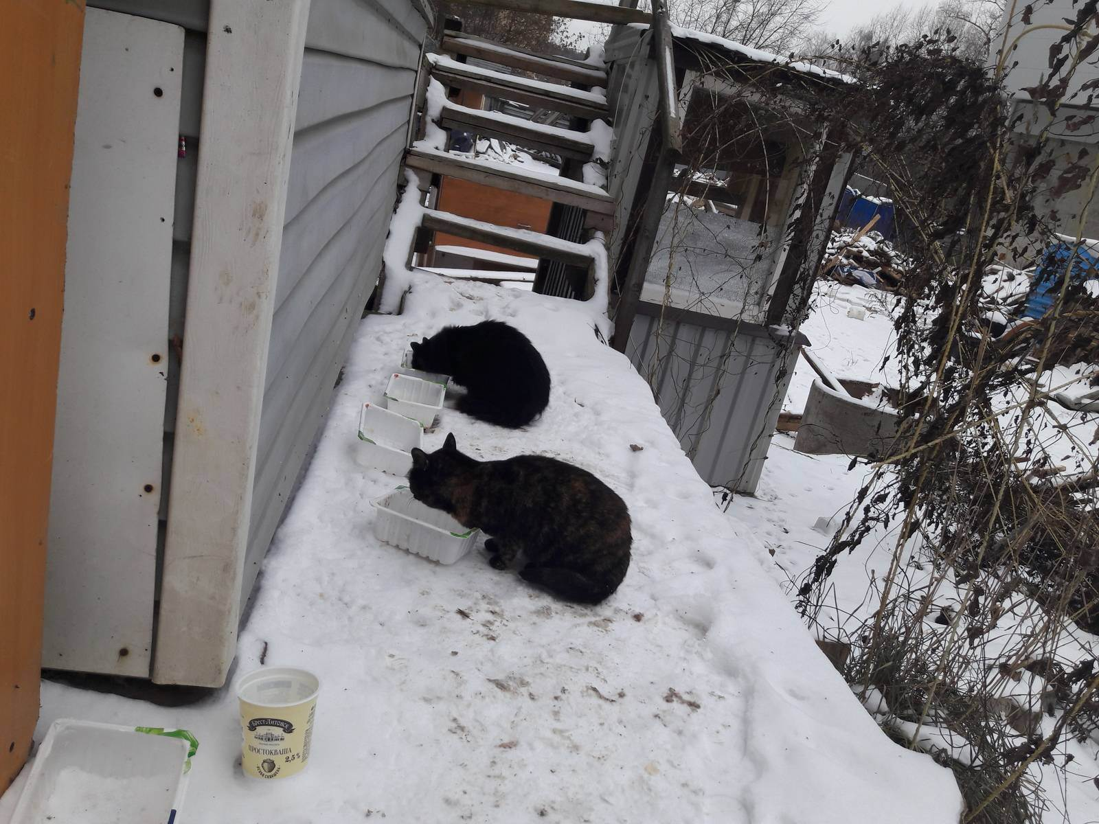 Как помочь кошке в жару: советы опытных заводчиков