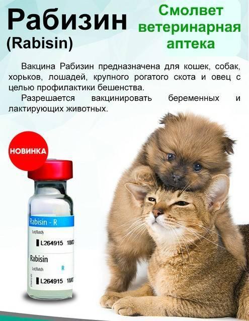 Рабизин для кошек: инструкция по применению вакцины, противопоказания к прививке